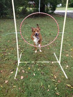 Dog Trainer: Discover more about dog training for agility! Dog Important Details Of Dog … – Sam ma Dog Training Agility Training For Dogs, Dog Agility, Dog Training Tips, Leash Training, Potty Training, Training Schedule, Training Videos, Diy Playground, Natural Playground