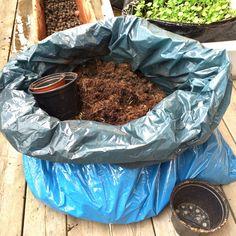 sank jord fra potter og kasser