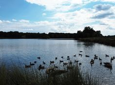 Photos from Richmond Park in London up on my blog: http://www.lucid-vision.com/2016/09/richmond-park-london.html#.V86azfnhDIV #london #nature #photography #olympus #travel
