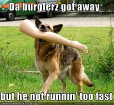 Dump A Day Funny Animal Pictures - 54 Pics
