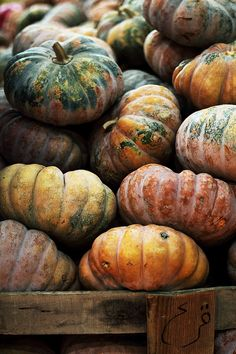 lovely pumpkins