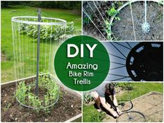 DIY How to Make Bike Rim Trellis for The Garden