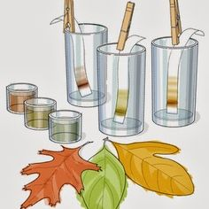 We did a great lab today all about photosynthesis and leaves changing colours in the fall.     First we learnt more about what photosynthesi...