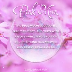 Today's Full Moon is known as the Pink Moon. As the pink phlox wildflower blooms, so does our passionate energy.
