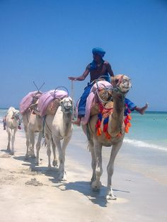 Djerba Tunisia ride camels one day with abdi East Africa, North Africa, Carthage Tunisia, Tunisia Africa, Arabian Beauty, Arabian Nights, Fauna, Africa Travel, Travel Around The World