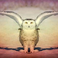 Emanate Heather King, Mirror Art, Art Photography, Owl, Bird, Animals, Fine Art Photography, Animales, Animaux