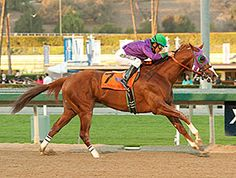I really want California Chrome to win the Triple Crown this year. Anyone else? He just won the Preakness!!!!