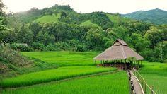 Laos - Quand le Kamu Lodge nous tente... - Bon plan voyage Laos
