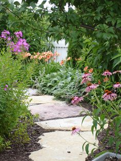 Garden Path, Cottage Garden, Garden Phlox, Lamb Ear, Echinicea, Sarah's Cottage Creations Lambs Ear, Us Images, Dream Garden, Garden Paths, Gardens, Cottage, Plants, Life, Outdoor Gardens