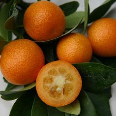 Kumquat -
