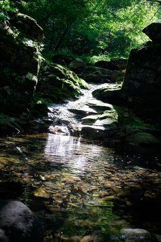 전원생활, nature, Korea travel, forest, woods, stream, water, valley