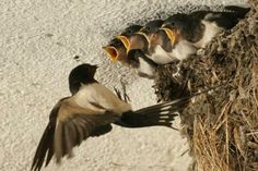 5 dau hieu chung to ban sap gap van may, tien bac thi nhau keo vao nhu vu bao - 7 All Birds, Little Birds, Love Birds, Animals And Pets, Baby Animals, Cute Animals, Pretty Birds, Beautiful Birds, Nester