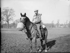 A mounted lance corporal of the Household Cavalry wearing a gas mask. His horse is also wearing a gas mask. Windsor, 1939.