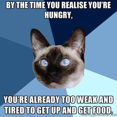 Chronic Illness Cat  ...   [picture of a Siamese cat's head against a triangle-sectioned background with many shades of blue. Top line of text reads: By the time you realise you're hungry, || Bottom line of text reads: you're already too weak and tired to get up and get food.]