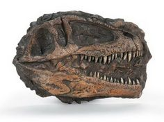 """The Giganotosaurus Skull Plaque is a 1:10 replica that measures 7.5"""" wide by 5.5"""" tall. Fossil remains found in Patagonia, Argentina, near Plaza Huincul."""