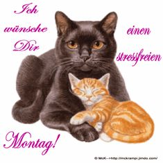 McK Montags GB mit BBCode Animiert und vieles mehr bei You are in the right place about Cat Accessories diy Here we offer you the most beautiful pictures a Betty Boop, I Love Cats, Cute Cats, Cat Nutrition, Image Cat, Vintage Art Prints, Cat Accessories, Animation, Tier Fotos