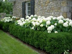 Farmhouse Landscaping Front Yard Ideas 20 Gorgeous Photos - All For Garden Boxwood Garden, Hydrangea Landscaping, Farmhouse Landscaping, Home Landscaping, Landscaping With Rocks, Front Yard Landscaping, Boxwood Hedge, Front Yard Hedges, Hedges Landscaping