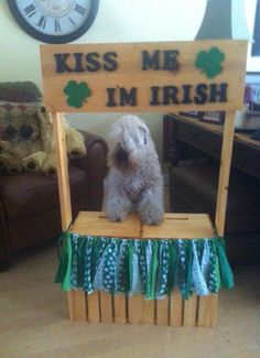 Miss Sophie getting ready in the kissing booth for this weekend at the Pet Expo!!   Kisses to you !!!!