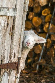 Nein, schon Ok Charlie, heute brauch ich keine Wolle! ...das ist Charlie! ....precieuse-damenature: theperfectworldwelcome: Belle & # 160; !!! \ O / §