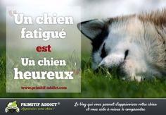 Primitif Addict – Education et Comportement de chiens primitifs | [citation] Un chien fatigué est un chien heureux !