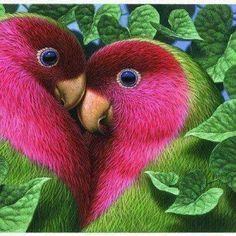 Lovebirds Exotic Birds, Colourful Birds, Colorful Parrots, Tropical Birds, Love Birds Pet