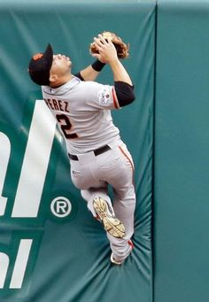 San Francisco Giants center fielder Juan Perez climbs the outfield wall to catch a ball hit by St. Louis Cardinals' Stephen Piscotty for an out during the first inning, Wednesday, Aug. in St. Sf Giants Players, Giants Team, Baseball Players, San Francisco Giants Baseball, San Francisco 49ers, Tim Hudson, Baseball Pants, Home Team, National League