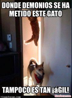 donde esta el gato?