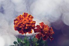 @pexels   Source: kaboompics.com