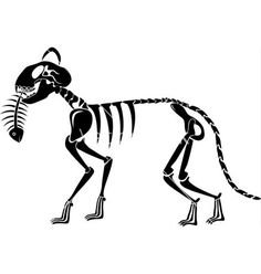 Cat skeleton caught a fish skeleton on VectorStock