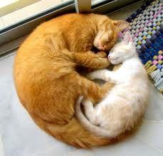 2 cats sleeping in circle