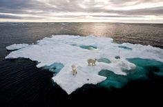 27.02. - Internationaler Eisbärentag