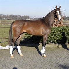 Paarden te koop: Jolly