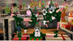 Los peludos del Terrenito os desean una Feliz Navidad!