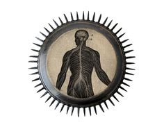 Nervous System PRICKLY PLAQUE 1872 Anatomy by sushipot on Etsy