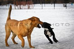 Silver Lake Dog Run - 2/13/11 - http://prints.blackpawphoto.com/galleries - #dogs #nyc #photography