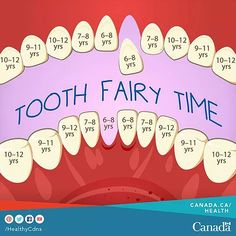 Tooth Fairy Timeline Learn what you need to know about loose teeth on our blog: https://www.slavelakedental.ca/single-post/2017/03/16/Loose-Teeth-What-You-Need-To-Know Loose Teeth: What You Need To Know | Family Dentist | Northern Alberta | Slave Lake Dental