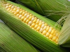 Ambrosia bi- Color Corn Seeds, Plump and sweet, Sugar enhanced bi-color with excellent flavor.Ambrosia is a plump and juicy corn variety. Named for its delectable taste, Ambrosia has a mix of white and yellow kernels! The long ears are burstin. Cream Corn Casserole, Corn Plant, Creamed Corn, Corn On Cob, Corn Salads, Garden Seeds, Garden Plants, Vegetable Garden, Sweet Corn