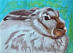 Drawing by Suzanne Berton (Canada) Rabbit Drawing, Jack Rabbit, Paper Animals, Jack White, Environmental Art, Conceptual Art, Contemporary Paintings, Hare, Sloth