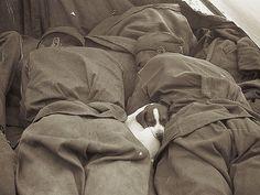 Cachorrinho dorme entre soldados russos