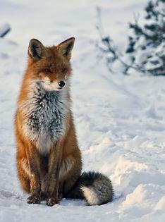 Hay animales que posiblemente nuestros alumnos nunca conozcan, sin embargo; hay hermosas fotografías que nos pueden ayudar para acercarlos al conocimiento...