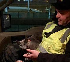 Saved Cat 2