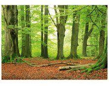 The Beech Grove 400cm breed - 280 cm hoog. Wordt geleverd in 8 delen (€79,95)