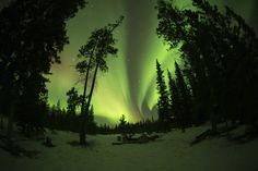 Aurora Borealis in Canada! Canadian Holidays, Discover Canada, Train Tour, Aurora Borealis, Holiday Travel, Rocky Mountains, Affair, Northern Lights, Cruise