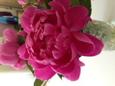 Peonies in my kitchen