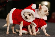 jingle bell rock!   All about #cats #dogs #pets click here