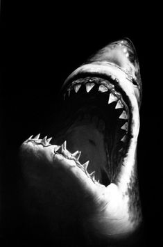 great white shark - spectacular black and white photo