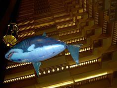Yikes! shark