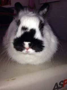 My Bunny has a natural mustache.
