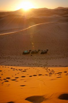 Sunrise over the desert, Erg Chebbi, Morocco.  Erg Chebbi is one of Moroccos two Saharan ergs  large dunes formed by wind-blown sand. The other is Erg Chigaga near Mhamid.