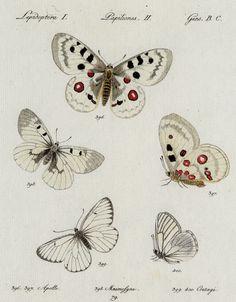Huebner_Tafel_aus_Sammlung_Schmetterlinge.jpg (2394×3067)
